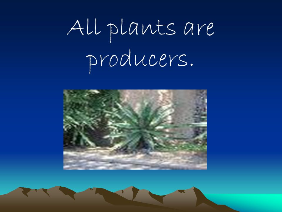 All plants are producers.