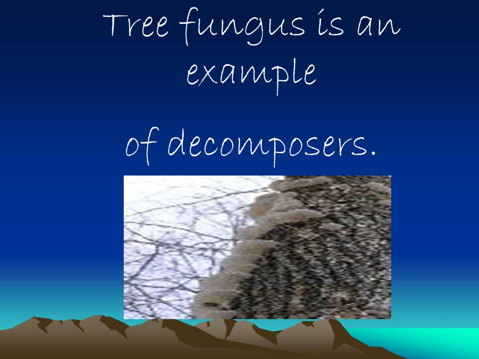 Tree fungus is an example of decomposers.