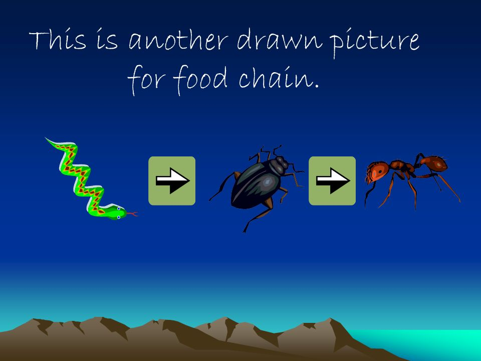 This is another drawn picture for food chain.