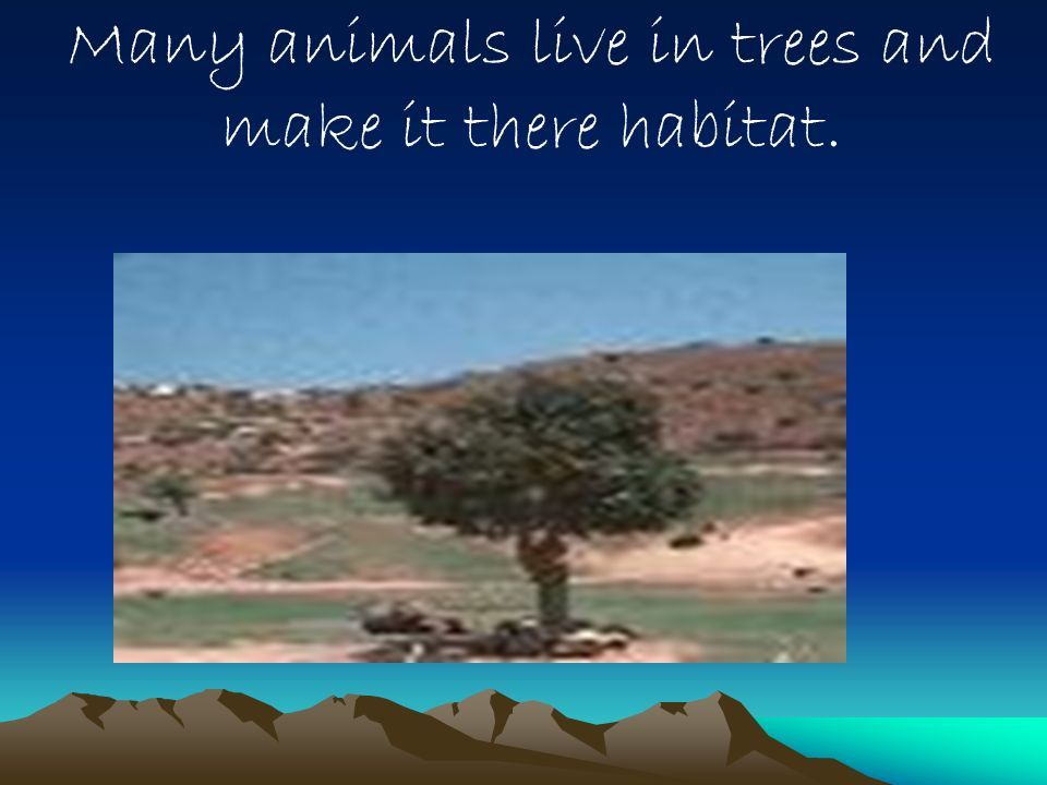 Many animals live in trees and make it there habitat.