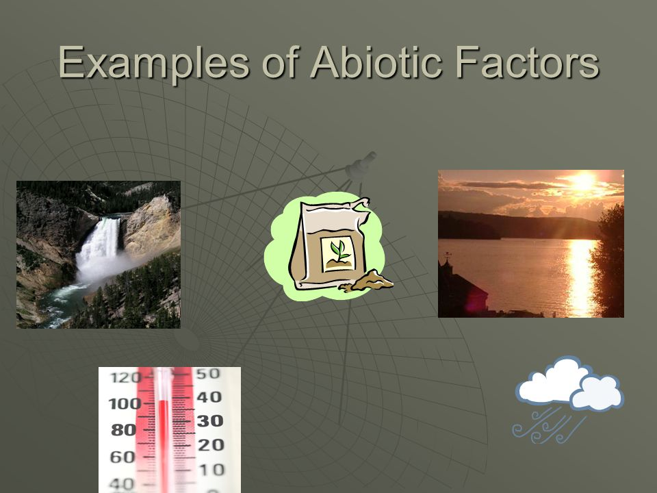 List the 5 abiotic factors to which organisms respond.