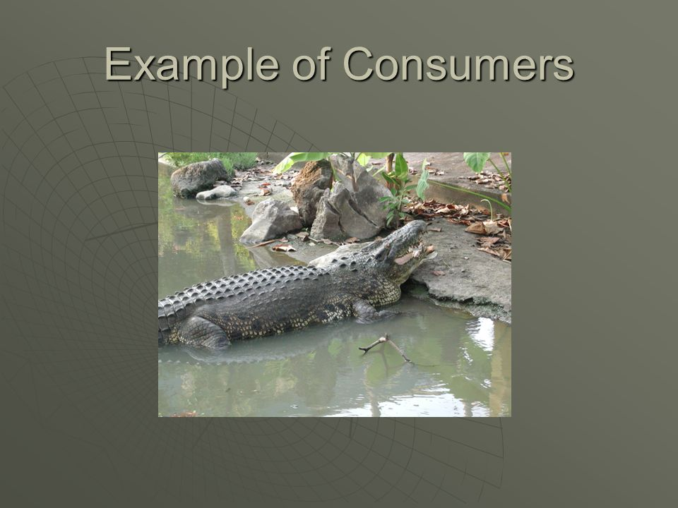 What are consumers  An organism that obtains energy by feeding on other organisms.