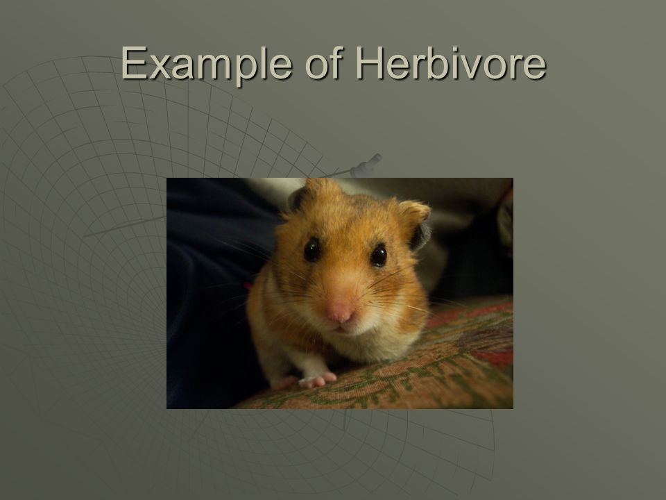 What are herbivores AAAAn animal that eats only plants.