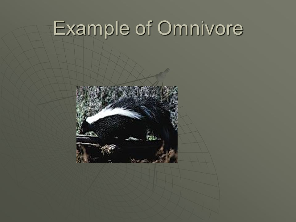 What are omnivores  An animal that eats both plants and animals.