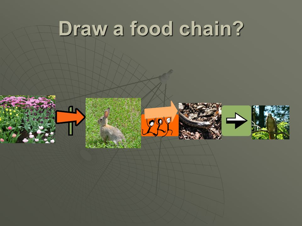 Example of Food Web