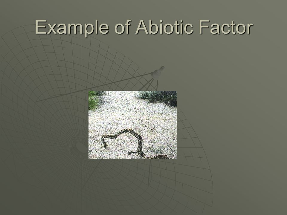 What are abiotic factors  A nonliving part of an ecosystem.