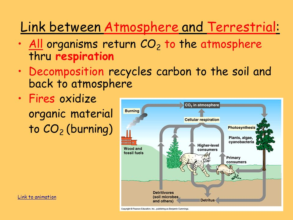 All organisms return CO 2 to the atmosphere thru respiration Decomposition recycles carbon to the soil and back to atmosphere Fires oxidize organic material to CO 2 (burning) Link to animation Link between Atmosphere and Terrestrial: