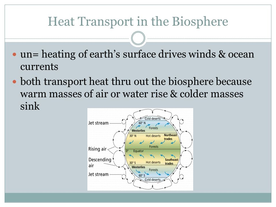 Heat Transport in the Biosphere un= heating of earth's surface drives winds & ocean currents both transport heat thru out the biosphere because warm masses of air or water rise & colder masses sink