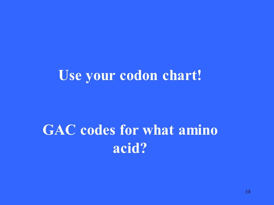 38 Use your codon chart! GAC codes for what amino acid