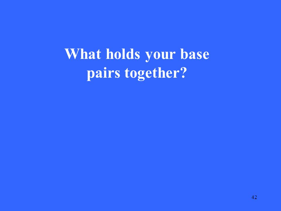 42 What holds your base pairs together
