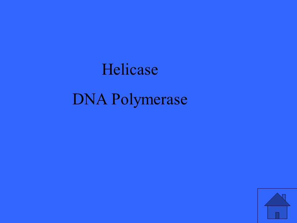 45 Helicase DNA Polymerase