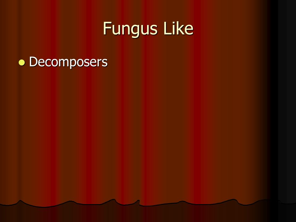 Fungus Like Decomposers Decomposers