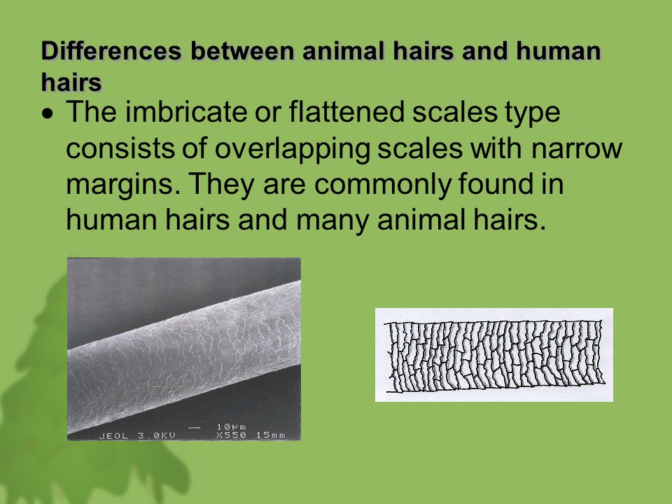 differences between human and animal communication Humans to distinguish both similarities and differences between the two approach to communication between humans and in royal society open science.