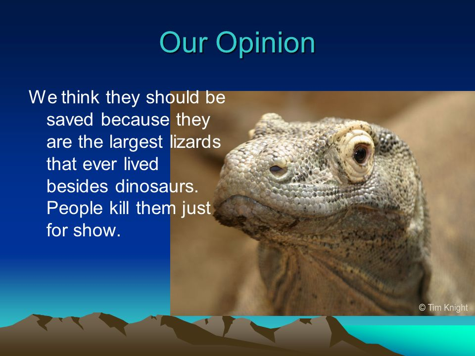 Our Opinion We think they should be saved because they are the largest lizards that ever lived besides dinosaurs.