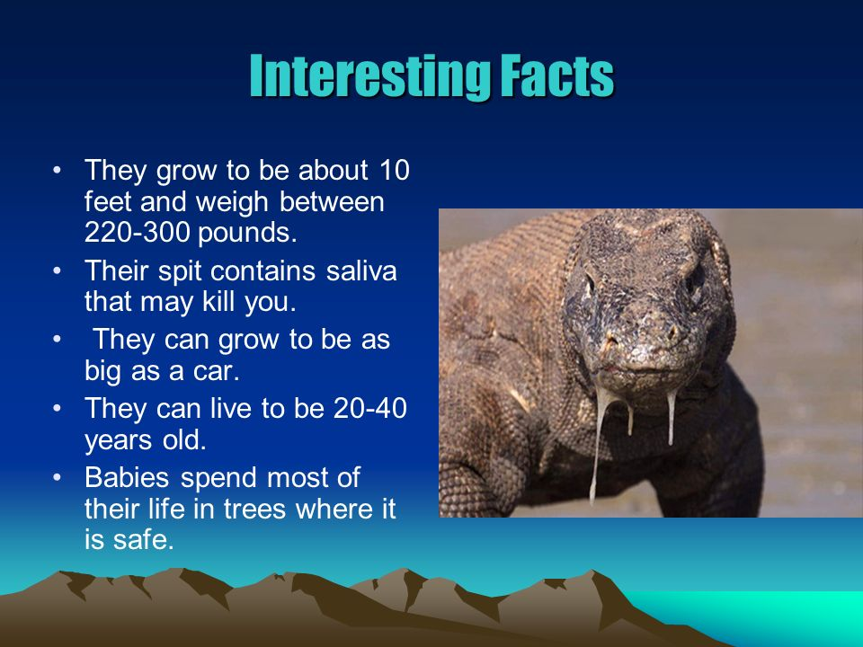 Interesting Facts They grow to be about 10 feet and weigh between 220-300 pounds.