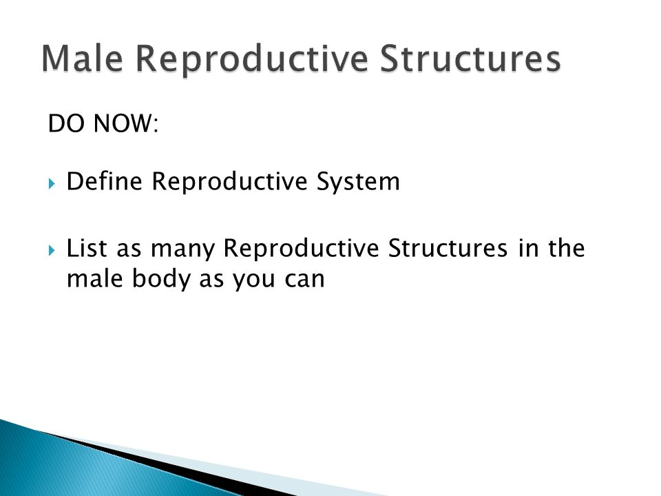 DO NOW:  Define Reproductive System  List as many Reproductive Structures in the male body as you can