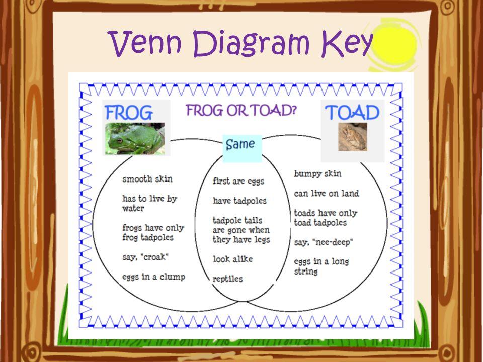 Frog And Toad Venn Diagram Ukrandiffusion