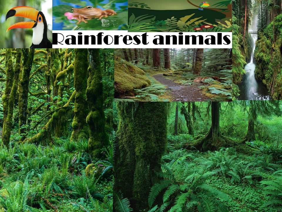 Rainforest biome plants and animals