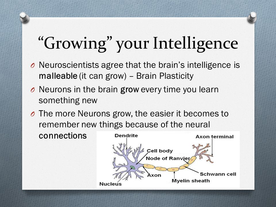 Growing your Intelligence O Neuroscientists agree that the brain's intelligence is malleable (it can grow) – Brain Plasticity O Neurons in the brain grow every time you learn something new O The more Neurons grow, the easier it becomes to remember new things because of the neural connections