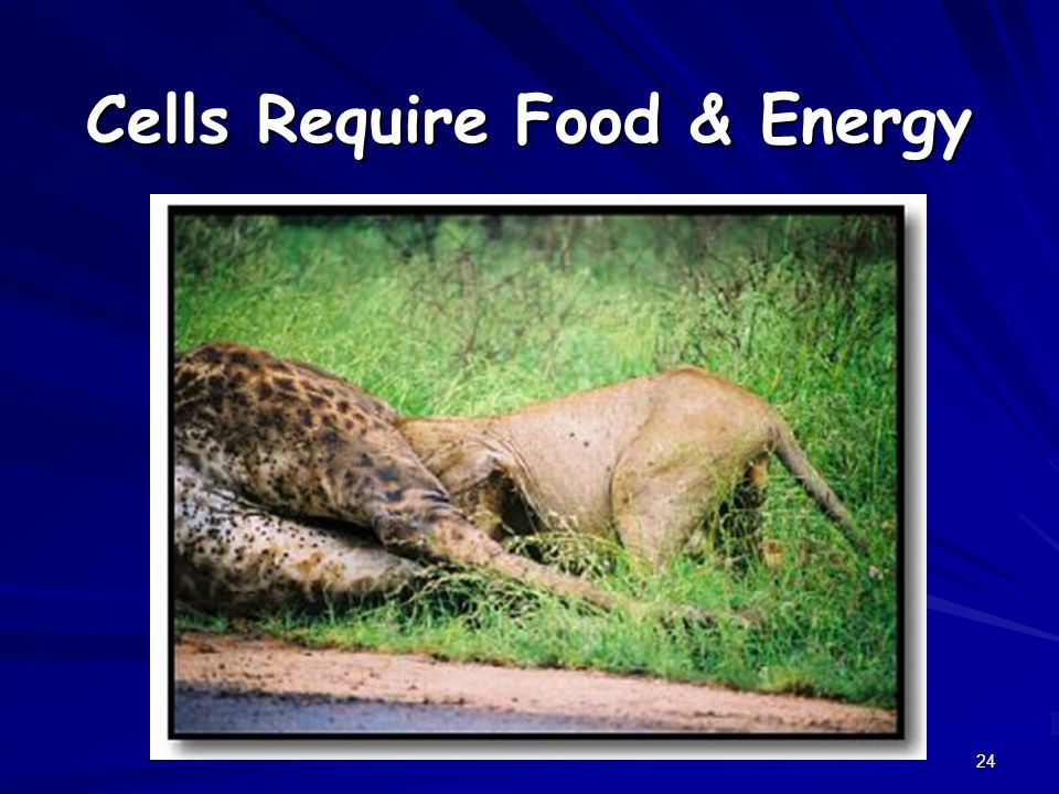 24 Cells Require Food & Energy