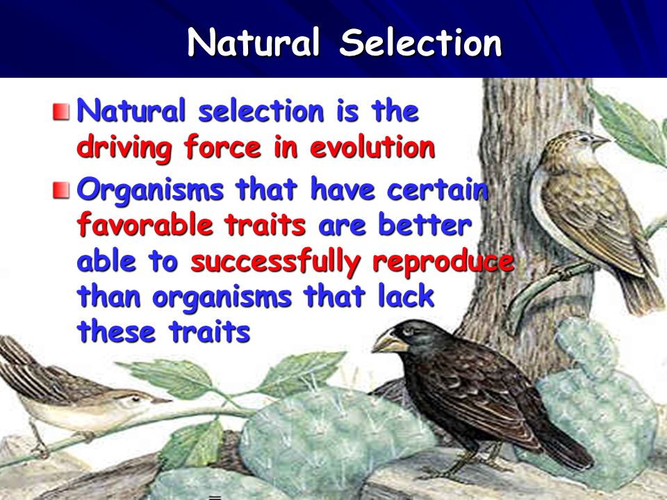 34 Natural Selection Natural selection is the driving force in evolution Organisms that have certain favorable traits are better able to successfully reproduce than organisms that lack these traits
