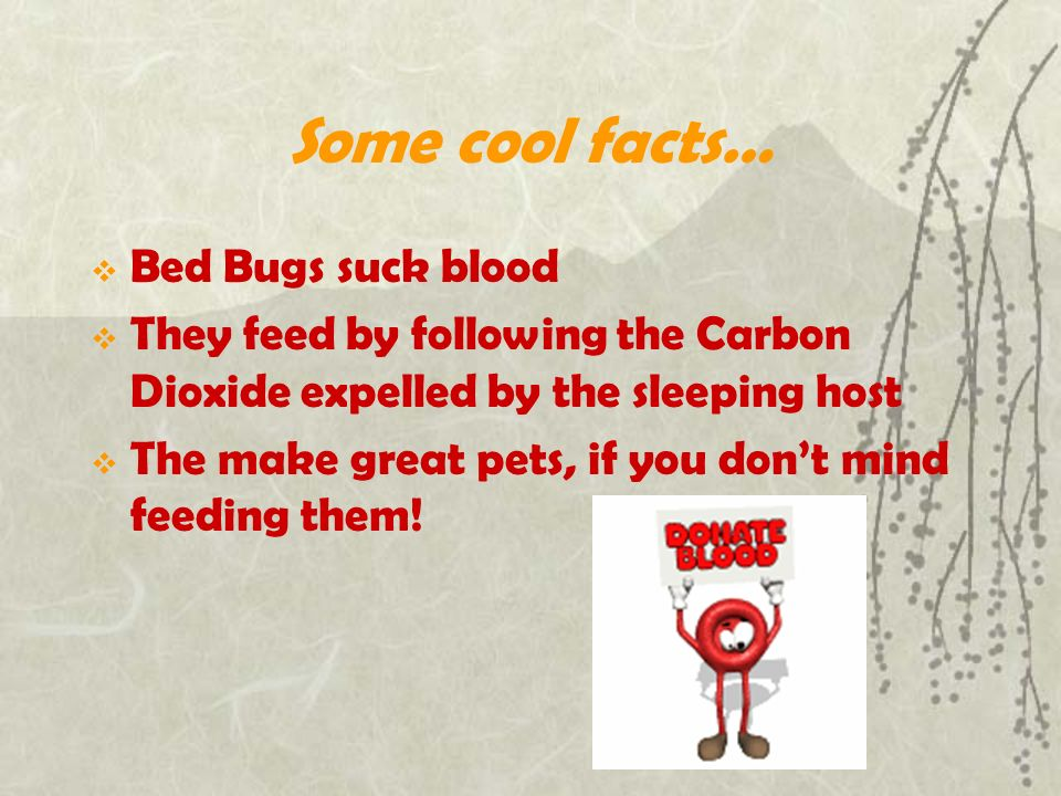myths hotel for managers blog facts terminix bug commercial bed on bugs and