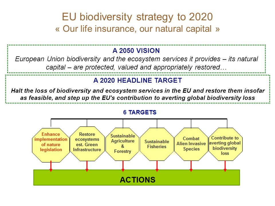 EU biodiversity strategy to 2020 « Our life insurance, our natural capital » A 2050 VISION European Union biodiversity and the ecosystem services it provides – its natural capital – are protected, valued and appropriately restored… A 2020 HEADLINE TARGET Halt the loss of biodiversity and ecosystem services in the EU and restore them insofar as feasible, and step up the EU s contribution to averting global biodiversity loss