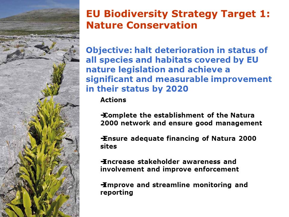 EU Biodiversity Strategy Target 1: Nature Conservation Objective: halt deterioration in status of all species and habitats covered by EU nature legislation and achieve a significant and measurable improvement in their status by 2020 Actions  Complete the establishment of the Natura 2000 network and ensure good management  Ensure adequate financing of Natura 2000 sites  Increase stakeholder awareness and involvement and improve enforcement  Improve and streamline monitoring and reporting