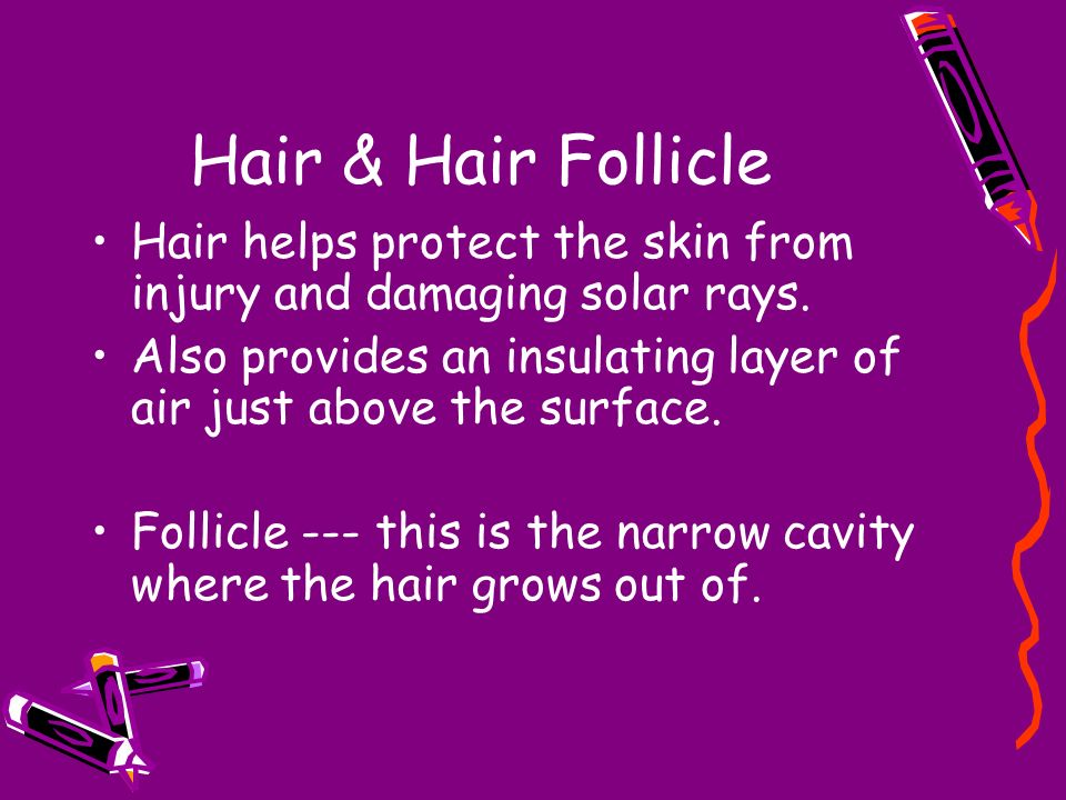 Hair & Hair Follicle Hair helps protect the skin from injury and damaging solar rays.
