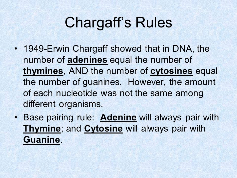 Chargaff's Rules 1949-Erwin Chargaff showed that in DNA, the number of adenines equal the number of thymines, AND the number of cytosines equal the number of guanines.