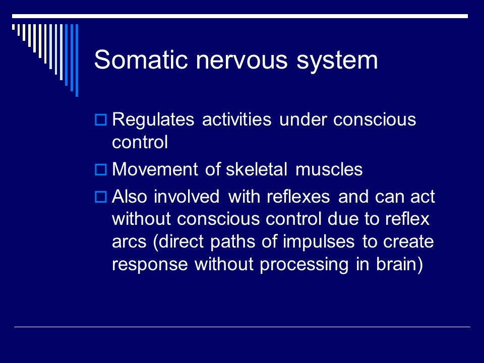 Somatic nervous system  Regulates activities under conscious control  Movement of skeletal muscles  Also involved with reflexes and can act without conscious control due to reflex arcs (direct paths of impulses to create response without processing in brain)