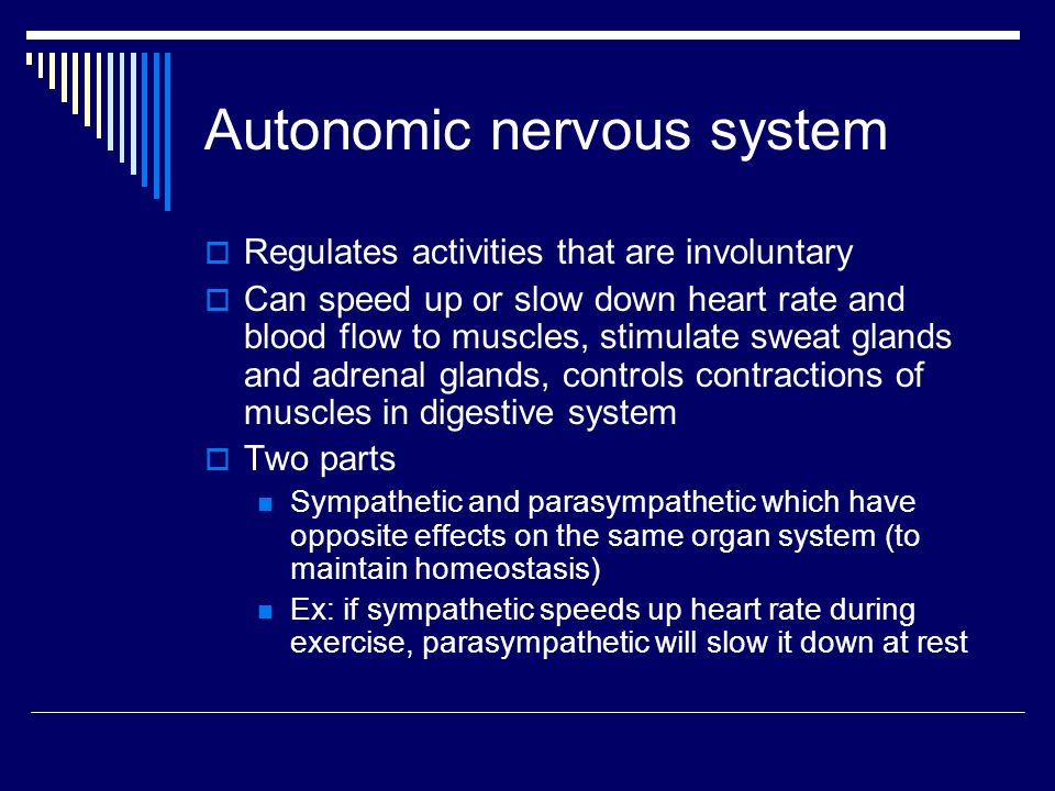 Autonomic nervous system  Regulates activities that are involuntary  Can speed up or slow down heart rate and blood flow to muscles, stimulate sweat glands and adrenal glands, controls contractions of muscles in digestive system  Two parts Sympathetic and parasympathetic which have opposite effects on the same organ system (to maintain homeostasis) Ex: if sympathetic speeds up heart rate during exercise, parasympathetic will slow it down at rest