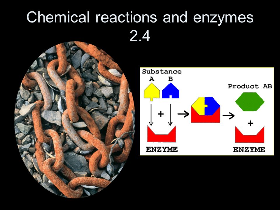 Chemical reactions and enzymes 2.4