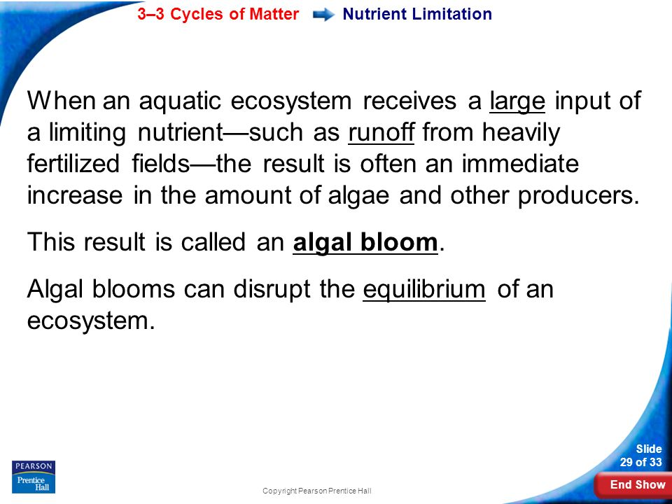 End Show 3–3 Cycles of Matter Slide 29 of 33 Copyright Pearson Prentice Hall When an aquatic ecosystem receives a large input of a limiting nutrient—such as runoff from heavily fertilized fields—the result is often an immediate increase in the amount of algae and other producers.