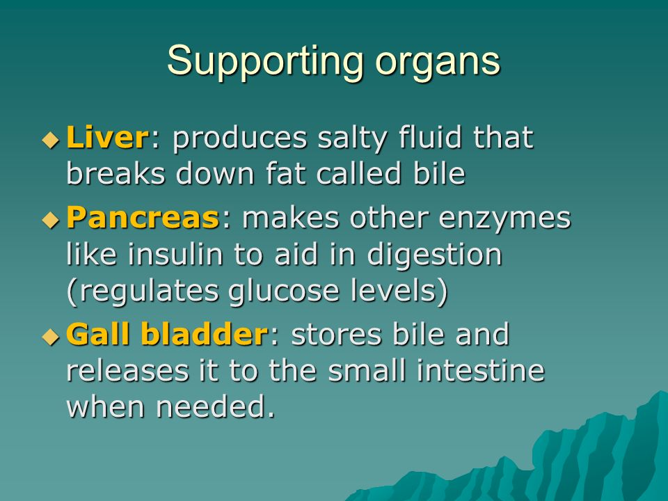 Supporting organs  Liver: produces salty fluid that breaks down fat called bile  Pancreas: makes other enzymes like insulin to aid in digestion (regulates glucose levels)  Gall bladder: stores bile and releases it to the small intestine when needed.