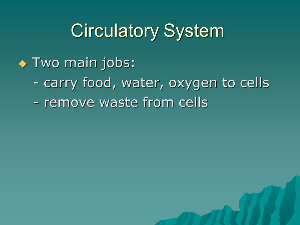 Circulatory System  Two main jobs: - carry food, water, oxygen to cells - remove waste from cells