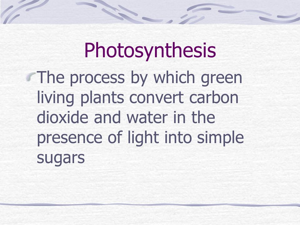 Photosynthesis The process by which green living plants convert carbon dioxide and water in the presence of light into simple sugars