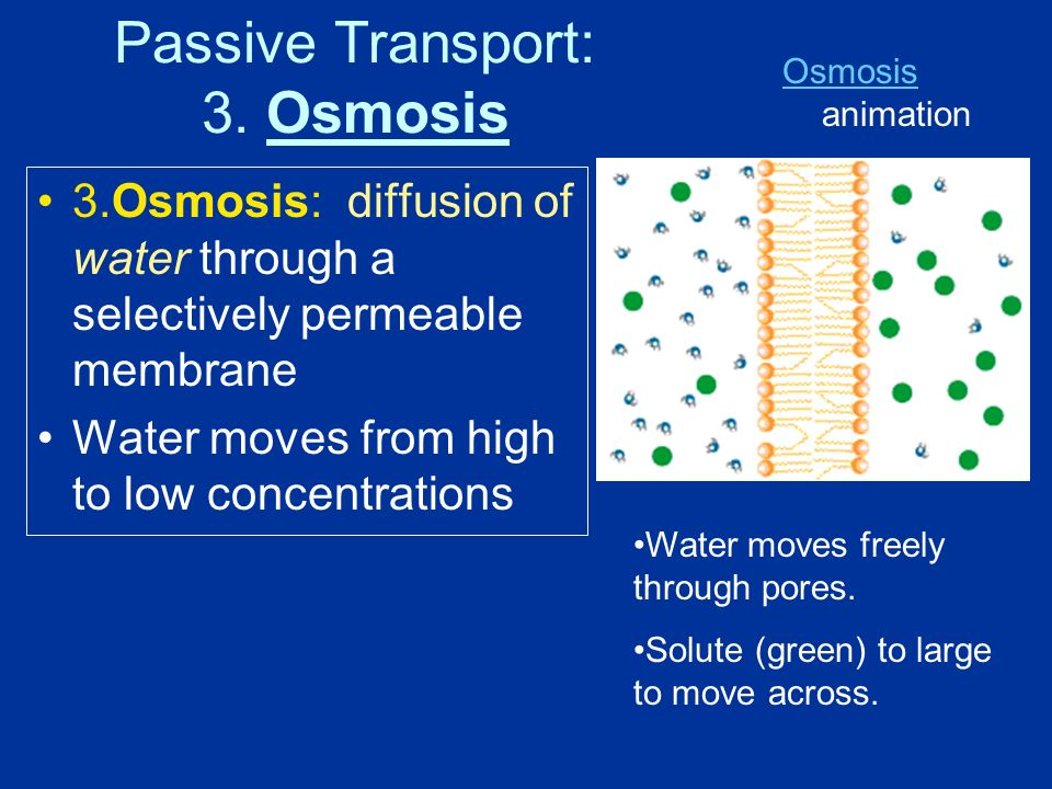 3.Osmosis: diffusion of water through a selectively permeable membrane Water moves from high to low concentrations Water moves freely through pores.