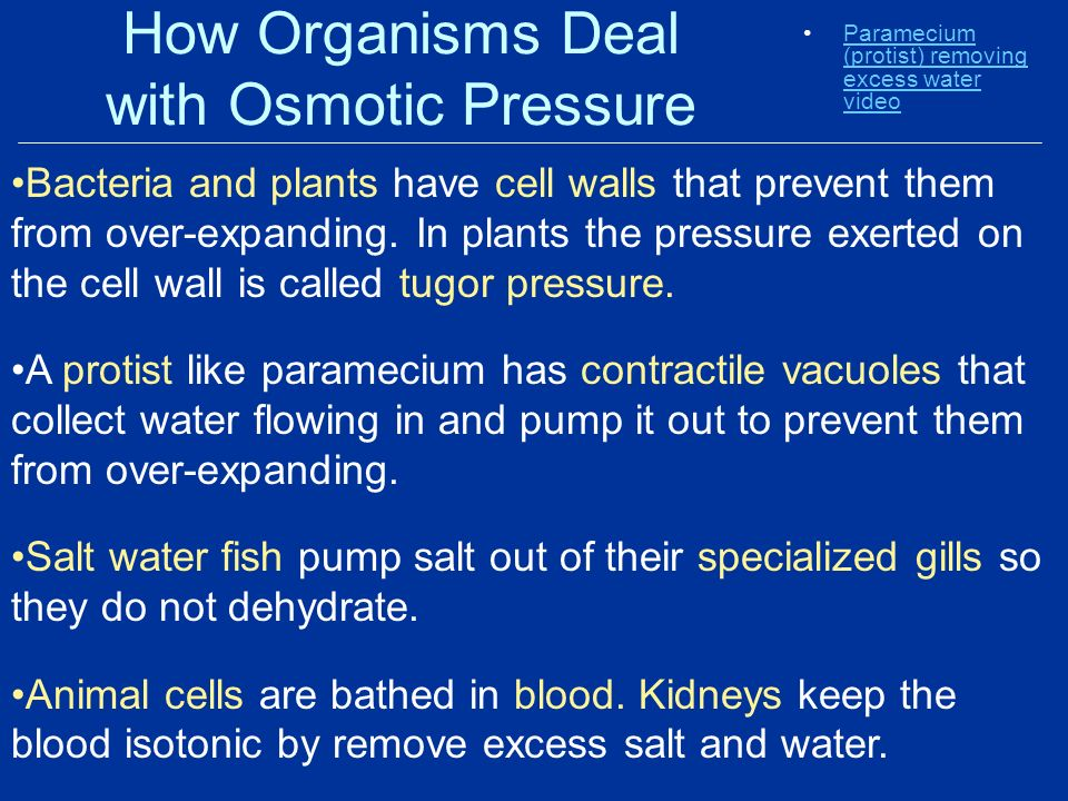 How Organisms Deal with Osmotic Pressure Paramecium (protist) removing excess water videoParamecium (protist) removing excess water video Bacteria and plants have cell walls that prevent them from over-expanding.