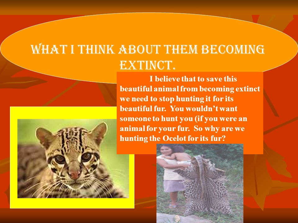 What I Think About Them Becoming Extinct.