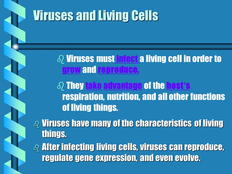 Viruses and Living Cells b b Viruses must infect a living cell in order to grow and reproduce.