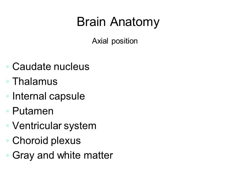 Cross Sectional Anatomy Brain and Spinal column. Brain Anatomy Axial ...