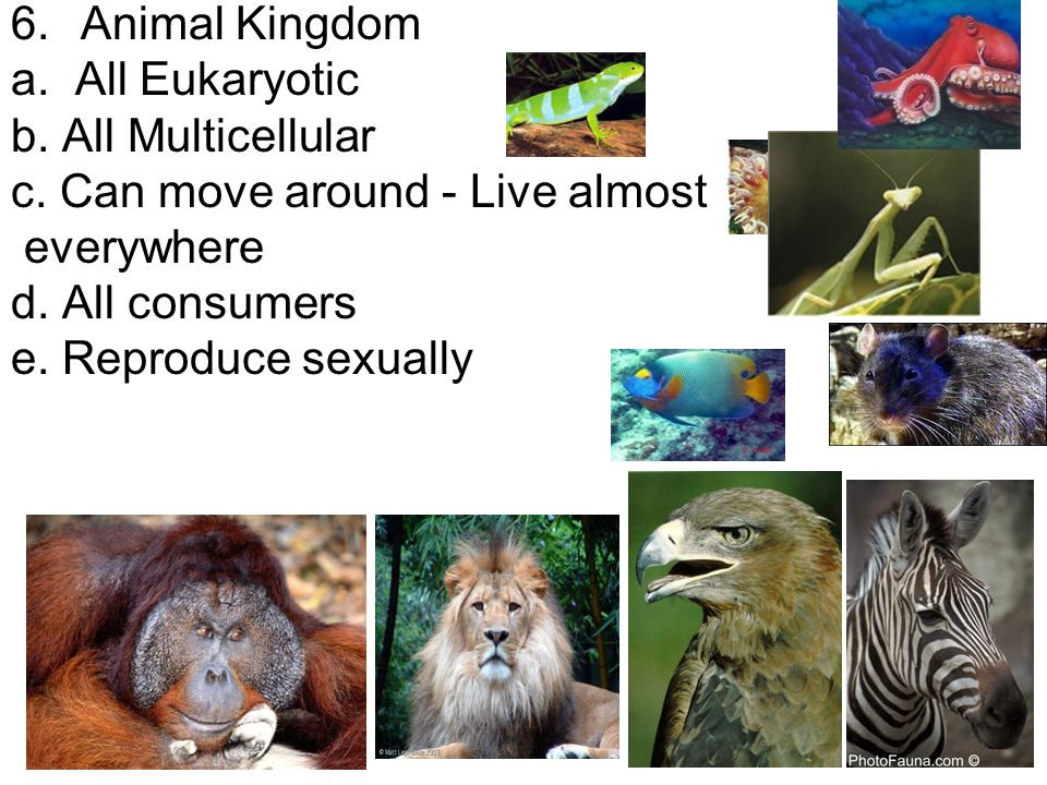 6.Animal Kingdom a. All Eukaryotic b. All Multicellular c.