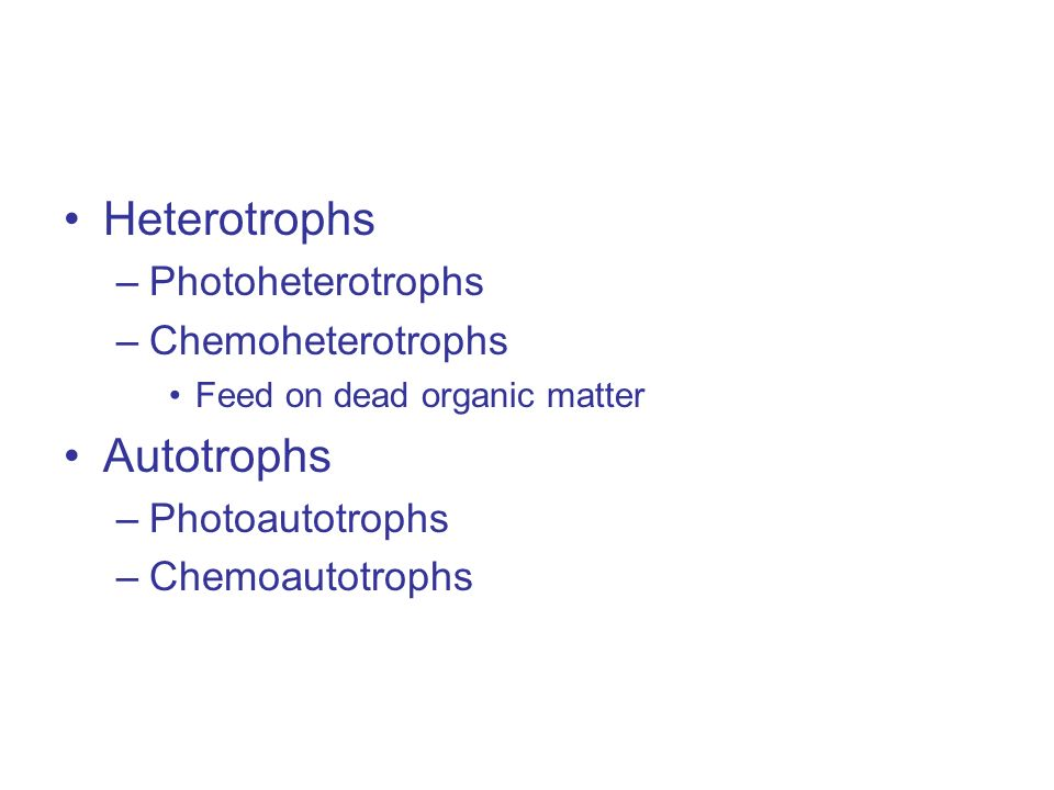 Heterotrophs –Photoheterotrophs –Chemoheterotrophs Feed on dead organic matter Autotrophs –Photoautotrophs –Chemoautotrophs