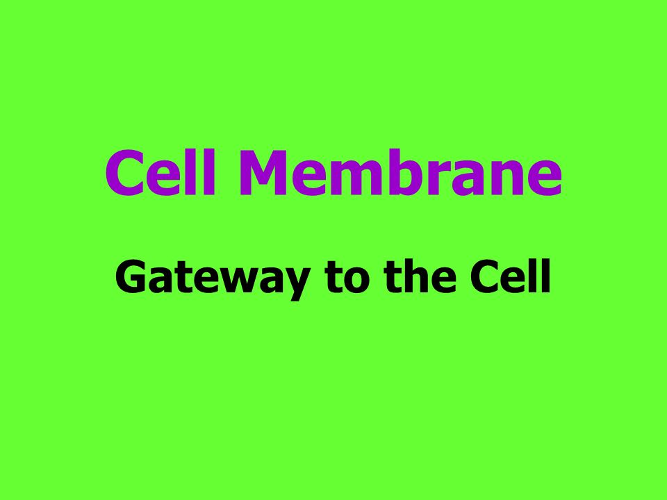 Cell Membrane Gateway to the Cell