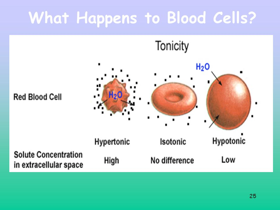 What Happens to Blood Cells 25