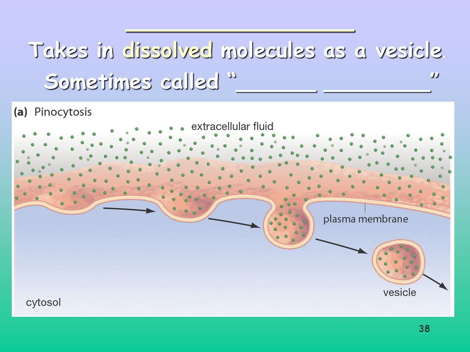 38______________ Sometimes called ______ ________ Takes in dissolved molecules as a vesicle Takes in dissolved molecules as a vesicle.