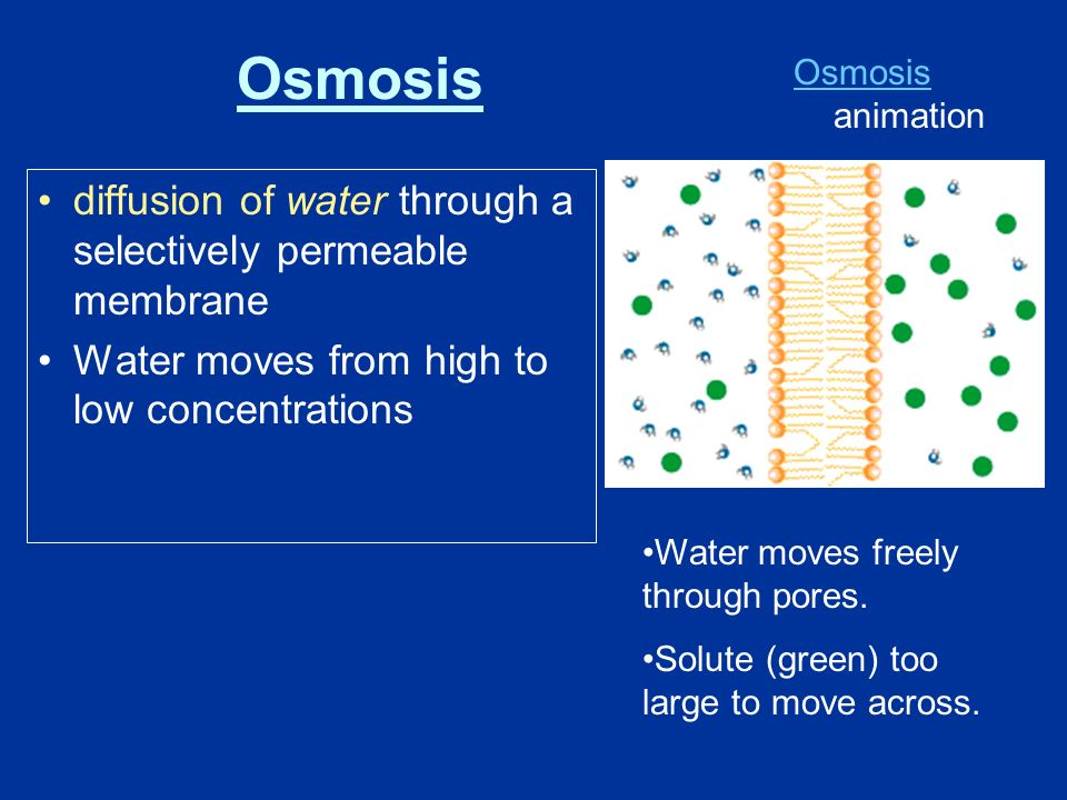 diffusion of water through a selectively permeable membrane Water moves from high to low concentrations Water moves freely through pores.