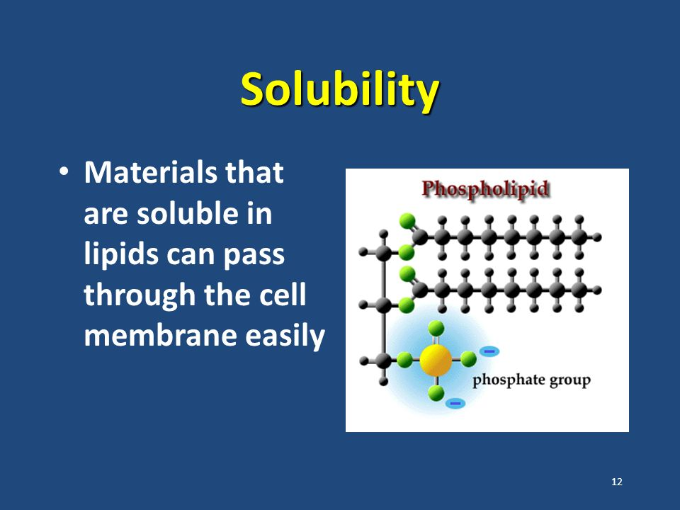 12 Solubility Materials that are soluble in lipids can pass through the cell membrane easily