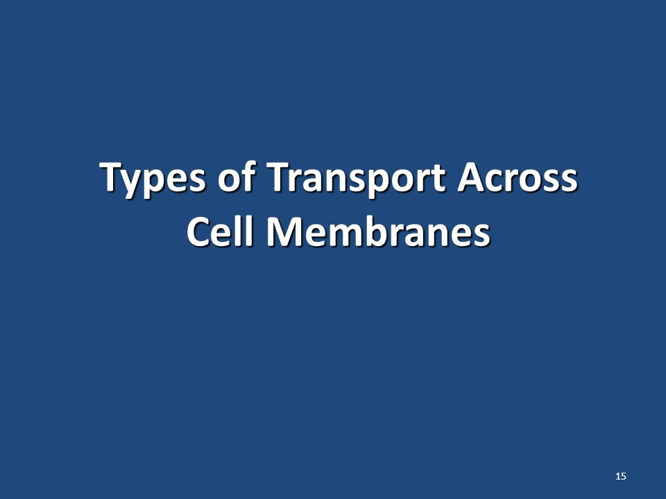 15 Types of Transport Across Cell Membranes